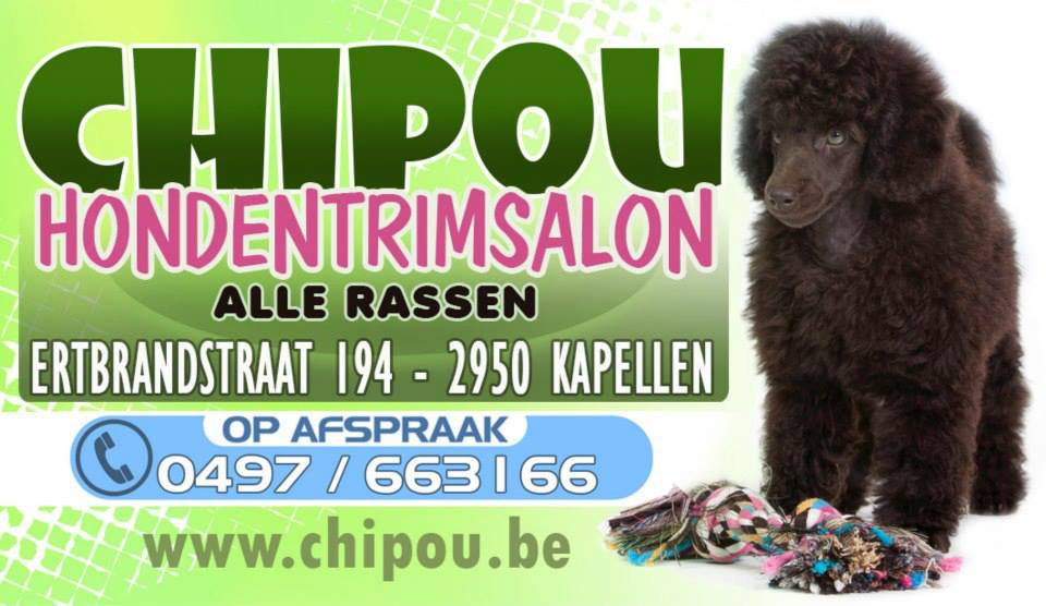 chipou hondentrimsalon6